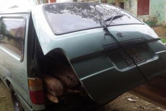 Hạt Kiểm lâm Vườn Quốc gia Phong Nha – Kẻ Bàng bắt giữ vận chuyển gỗ trái phép